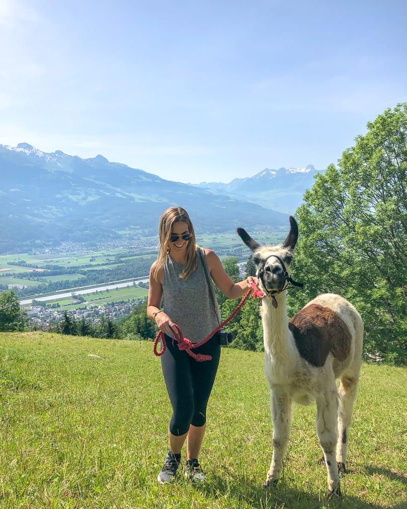 Llama Trekking in Liechtenstein